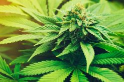 Does cannabis increase your endurance?