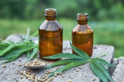 The Time for CBD Oil Choices